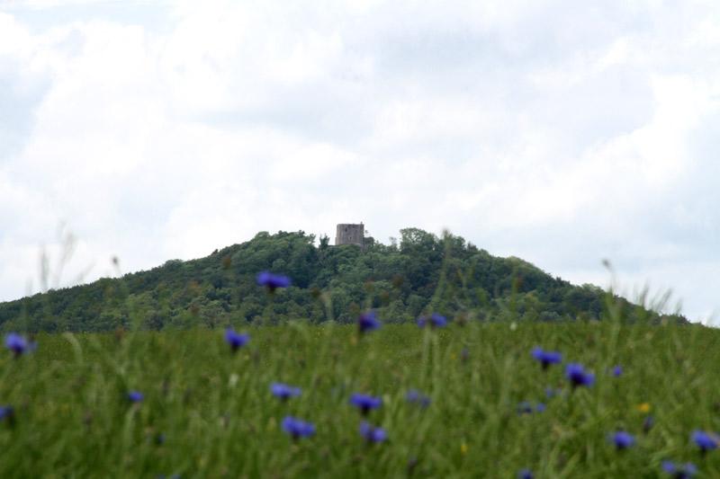 Weidelsburg-kornblumen